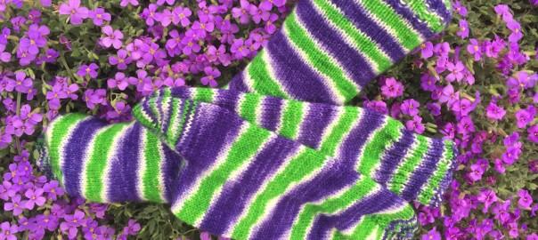 Drachenwolle Fliederbusch